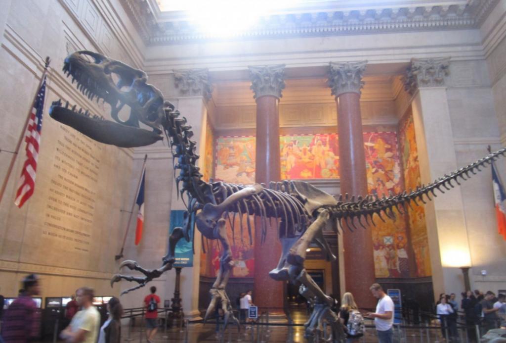 musée-histoire-naturelle-tyranosaure
